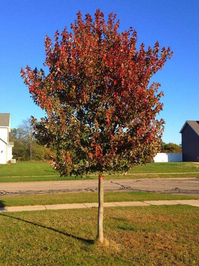 Looks like Fall!